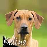 Beschreibung: http://zuritamu.de/stammhunde-Dateien/image007.png