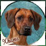 Beschreibung: http://zuritamu.de/stammhunde-Dateien/image010.png