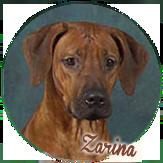Beschreibung: http://zuritamu.de/stammhunde-Dateien/image011.png