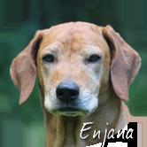 Beschreibung: http://zuritamu.de/stammhunde-Dateien/image012.png