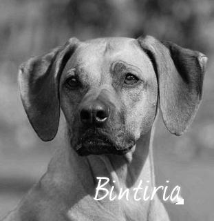Beschreibung: http://zuritamu.de/stammhunde-Dateien/image014.png
