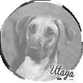 Beschreibung: http://zuritamu.de/stammhunde-Dateien/image016.png