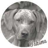 Beschreibung: http://zuritamu.de/stammhunde-Dateien/image018.png