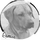 Beschreibung: http://zuritamu.de/stammhunde-Dateien/image020.png