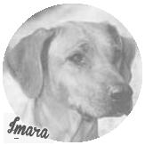 Beschreibung: http://zuritamu.de/stammhunde-Dateien/image024.png
