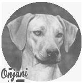 Beschreibung: http://zuritamu.de/stammhunde-Dateien/image026.png