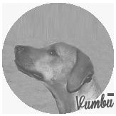 Beschreibung: http://zuritamu.de/stammhunde-Dateien/image028.png