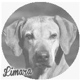 Beschreibung: http://zuritamu.de/stammhunde-Dateien/image030.png