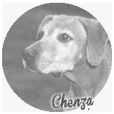 Beschreibung: http://zuritamu.de/stammhunde-Dateien/image034.png
