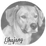 Beschreibung: http://zuritamu.de/stammhunde-Dateien/image036.png