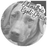 Beschreibung: http://zuritamu.de/stammhunde-Dateien/image038.png