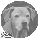 Beschreibung: http://zuritamu.de/stammhunde-Dateien/image040.png