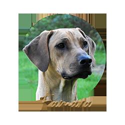 Beschreibung: http://zuritamu.de/stammhunde/famara.png