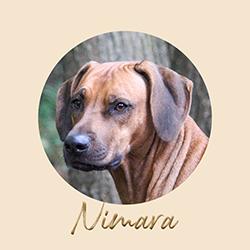 Beschreibung: http://zuritamu.de/stammhunde/nimara.png